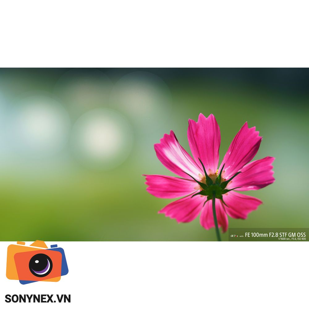 Ong_kinh_sony_fe_100mm_f2_8_stf_gm_oss_l
