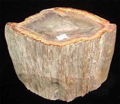 Gỗ hóa thạch (Fossil Of Wood)